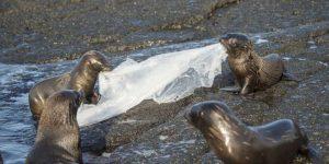 Contaminación en mares